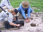 Picture of French Documentary makers filming Dung Beetles